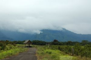 Mt Waialeale, 2nd wettest spot on earth