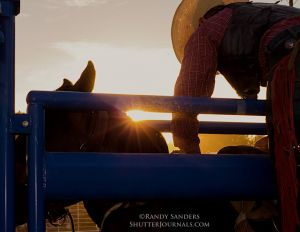 NPRA-Sun sets on arena as cowboy leans over the chute in preparation to ride a saddle bronc